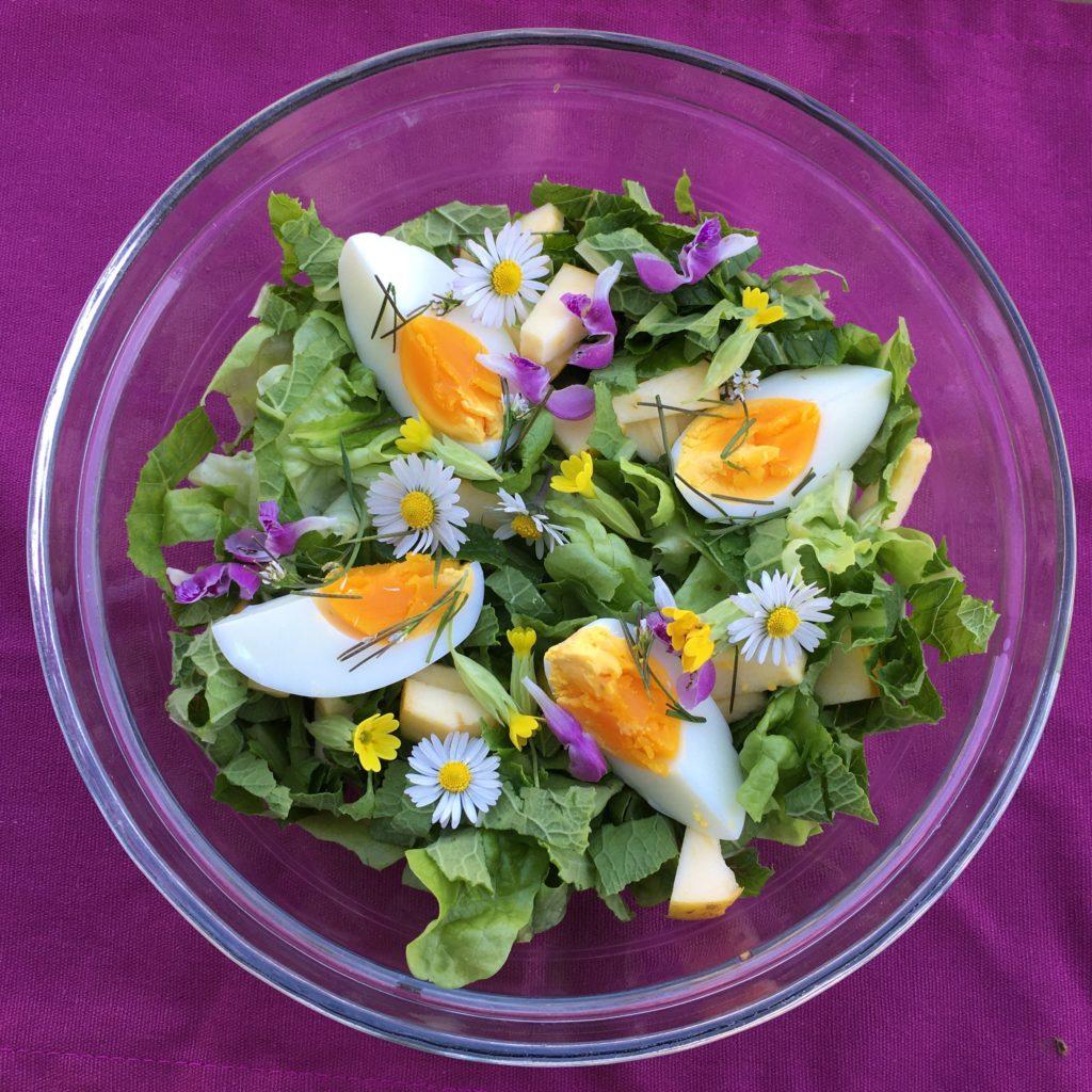 Salade aux feuilles de primevère
