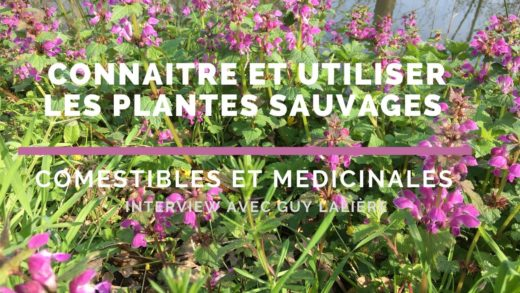 Connaître et utiliser les plantes sauvages comestibles - Guy Lalière