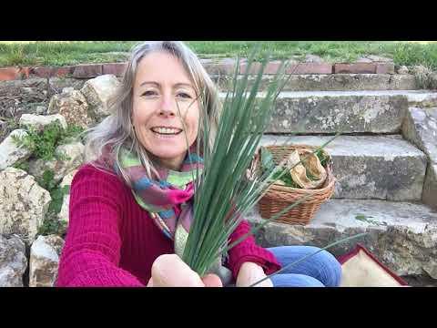 Retour de cueillette de plantes sauvages comestibles