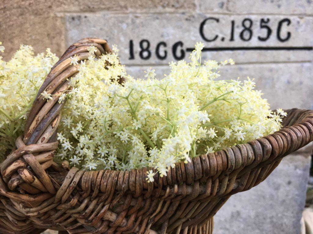 Panier de fleurs de sureau
