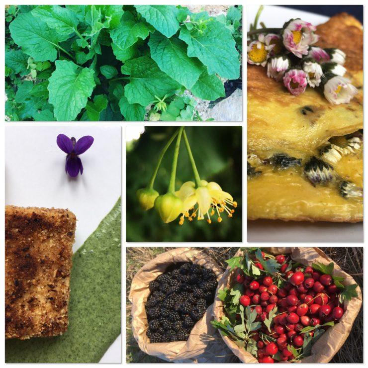 Compo oser utiliser les plantes sauvages comestibles