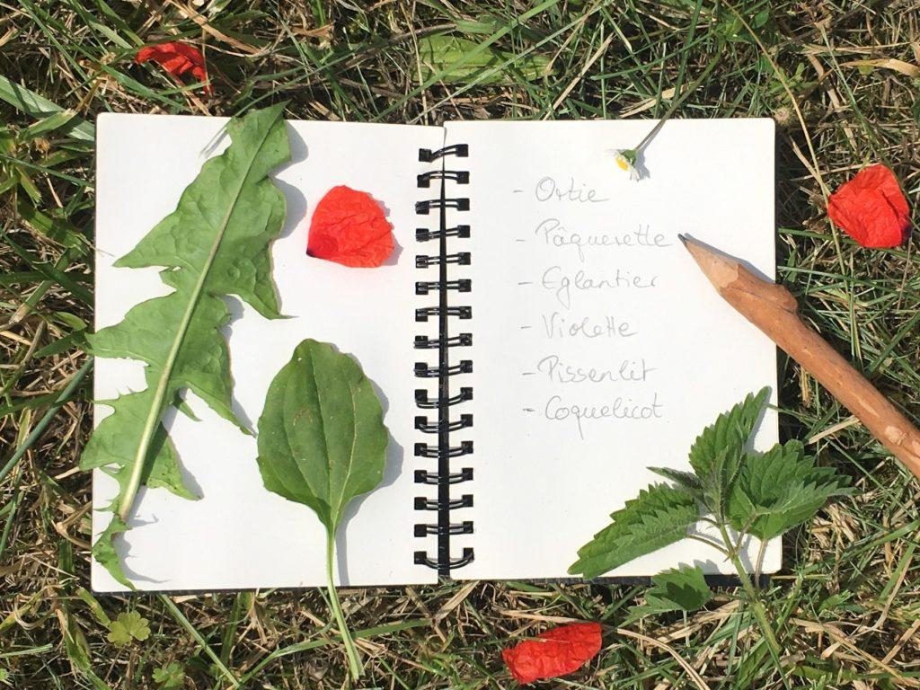 Liste de plantes - pour utiliser les plantes sauvages comestibles