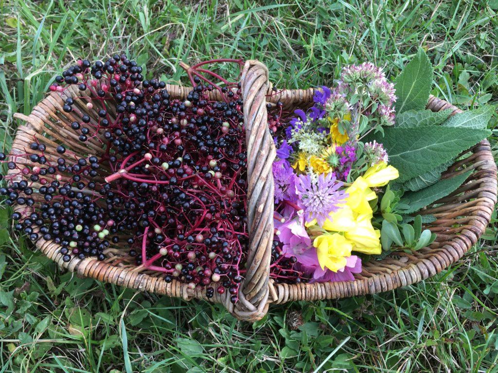 Panier d'été pour (sur)vivre avec les plantes sauvages comestibles