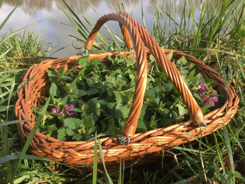 Lamier pour (sur)vivre avec les plantes sauvages comestibles