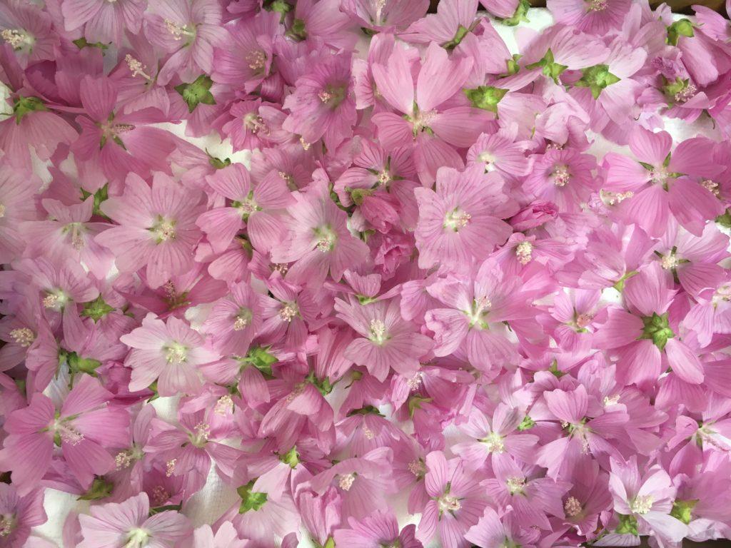 Fleurs mises à sécher