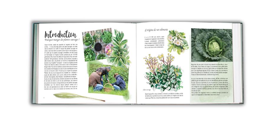 40 plantes sauvages comestibles 40 recettes introduction