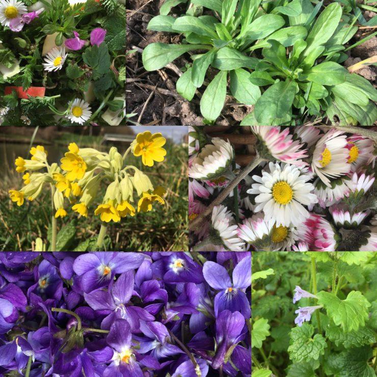 Quelles plantes cueillir au mois de mars