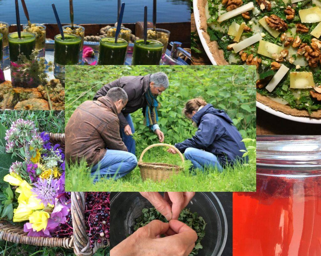 Stage cueillette et cuisine des plantes sauvages en bord de Loire