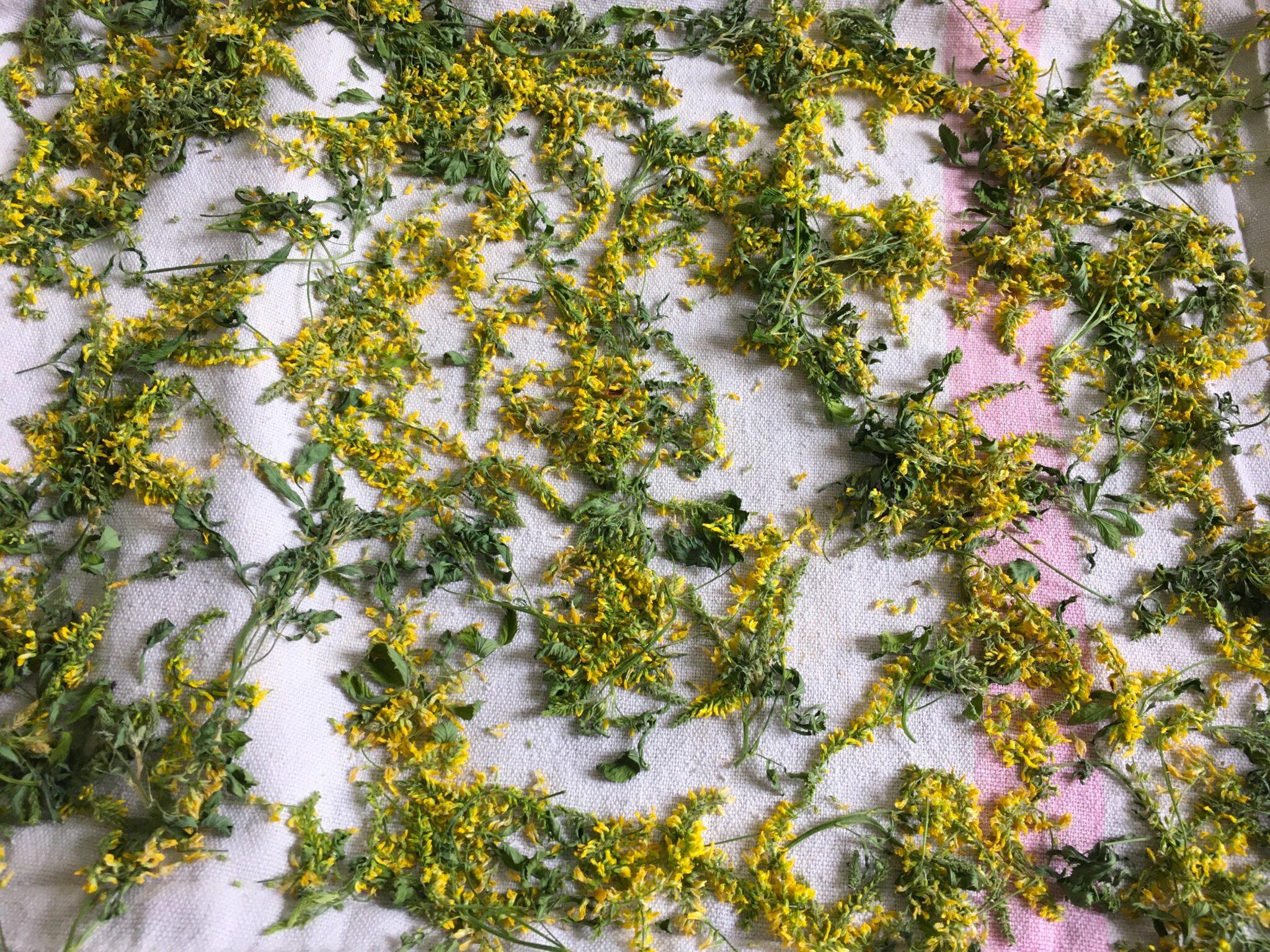 Séchage des feuilles et fleurs